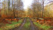 place SAINT-JEAN-AUX-BOIS - Point 5 - Photo 4