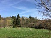 place Profondeville - Arbre - Photo 2