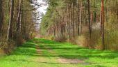 place COMPIEGNE - Point 38 - Photo 3