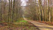 place SAINT-JEAN-AUX-BOIS - Point 13 - Photo 4