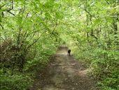 Point d'intérêt LA CHAPELLE-EN-VEXIN - Bois des Bouleaux - Photo 1