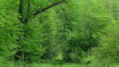 place LACROIX-SAINT-OUEN - Point 33 - Photo 3