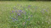 place FRAVAUX - Fleurs - Photo 1