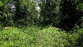 Point d'intérêt SAINT-JEAN-AUX-BOIS - Point 28 - Photo 1